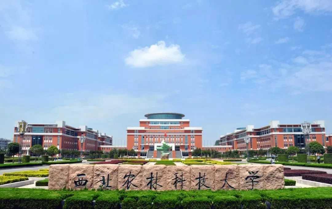这些实力堪比美院的985院校,都开设了美术类专业!广州围墙画室附图20
